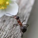 ant-954015_640