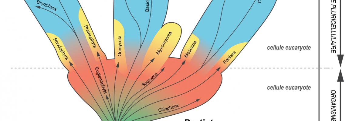 La classification des espèces